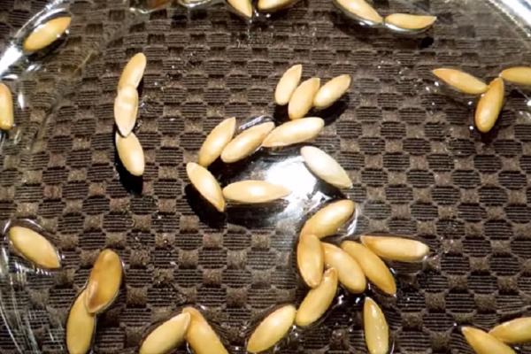 Перед посадкой семена замачивают на сутки в теплой воде, те, что всплыли в воде, выбрасывают