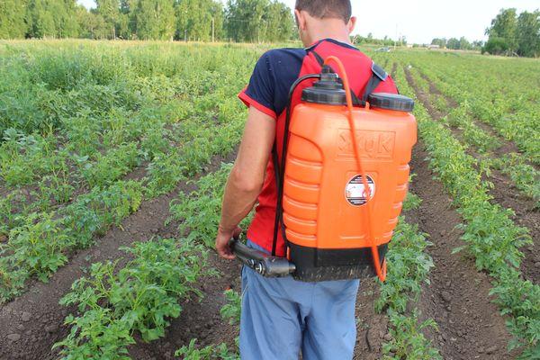 Избавить картофель от вредителей на весь период созревания - одно из важнейших условий ухода