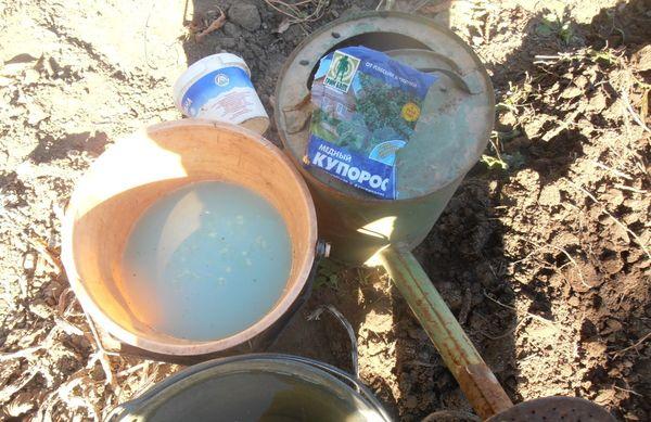 Перед высадкой рассады Титана в грунт почва проливается медным купоросом