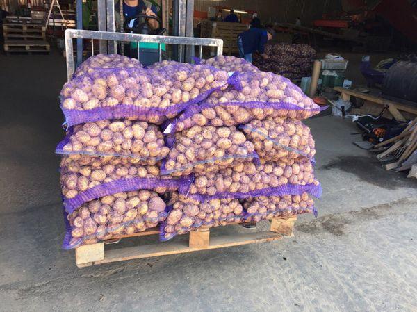 Картофель Уладар отлично хранится и не требует дополнительных хлопот
