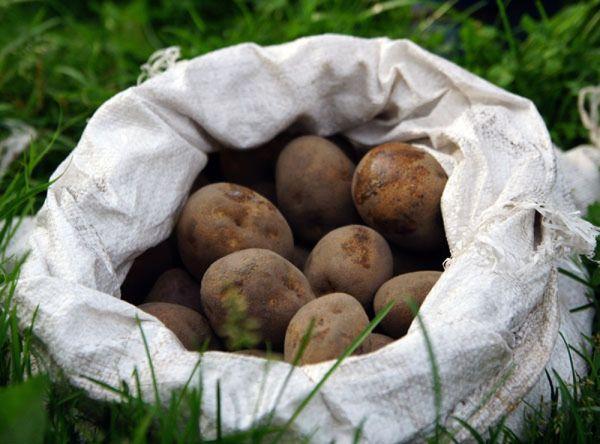 Ни в коем случае нельзя хранить семена в белых синтетических мешках