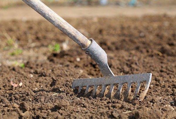 Чеснок хорошо растет на супесчаных и суглинистых почвах с нейтральной реакцией
