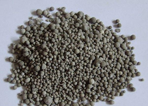 Непосредственно перед посадкой в грунт необходимо внести в лунки суперфосфат