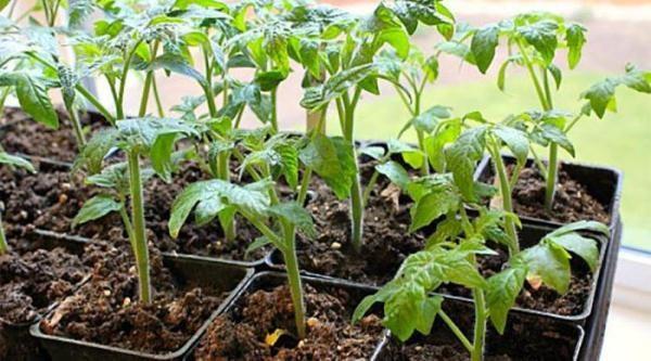 Метод позволяет обойтись минимумом рассадного материала