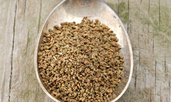Семена корневого сельдерея
