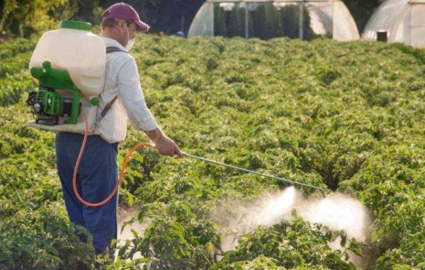 Опрыскивание растений препаратом превикур энерджи