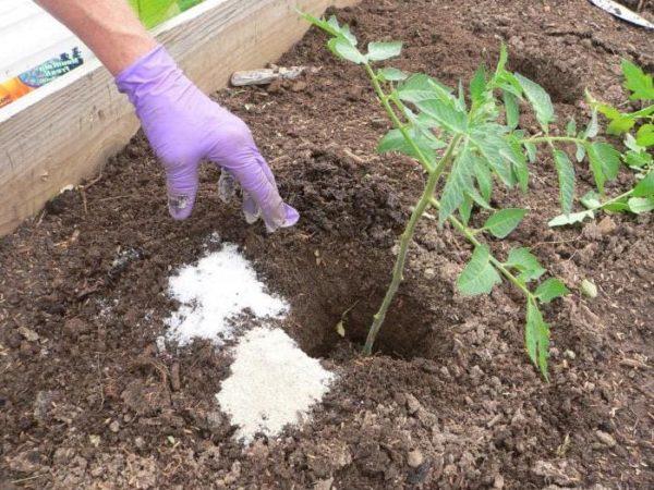 Пример использования удобрения при пересадке томатов в открытый грунт