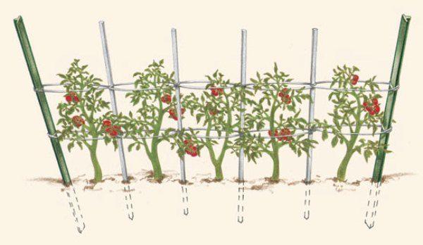 Конструкция шпалеры для помидоров