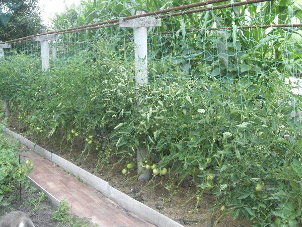 Шпалера для помидоров из полимерной сетки