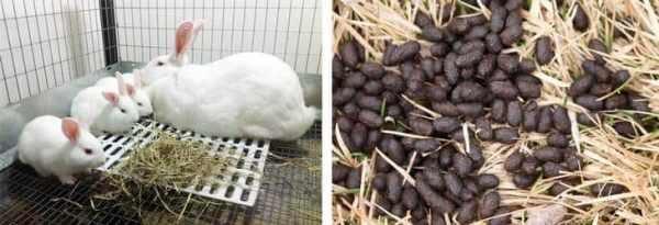 Кролики едят траву и перерабатывают ее в полезное удобрение для растений
