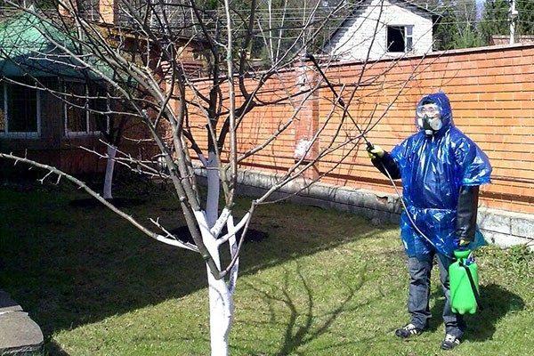 Обработку медным купоросом можно проводить только в безветренную погоду