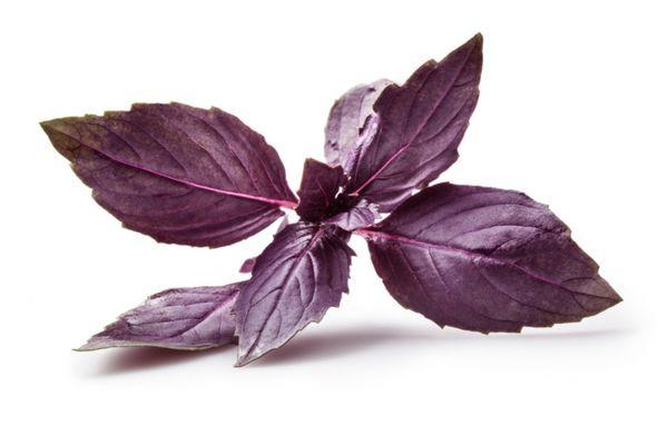 Фиолетовые листья базилика обладают более резким ароматом