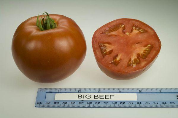 Средний вес плодов сорта - 300-500 грамм