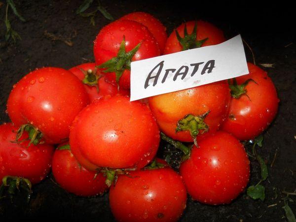 Средний вес плодов сорта - 100 грамм