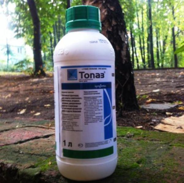 С помощью фунгицида Топаз можно проводить профилактику и лечение грибковых болезней растений