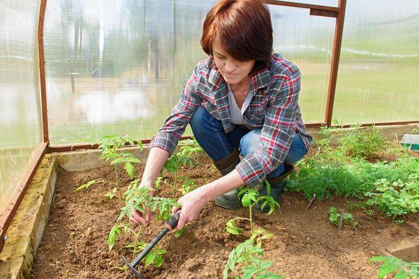 При рыхлении к корням поступает дополнительное количество кислорода