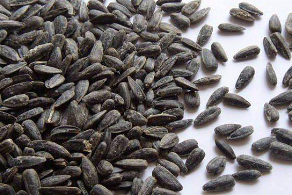 Перед посадкой семена подсолнуха сортируют и замачивают в растворе марганца