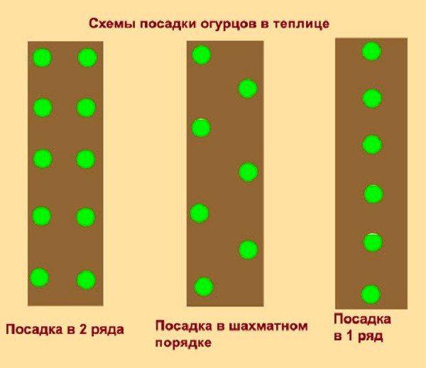 Разнообразие схем посадки огурцов