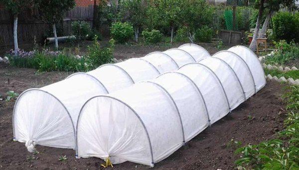 Парники защитят рассаду капусты от поздних заморозков