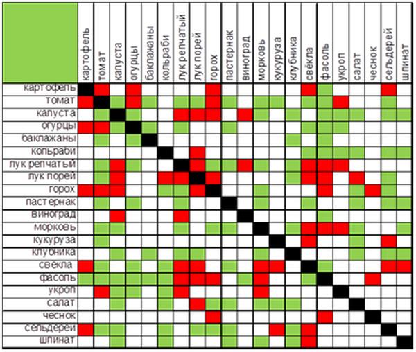 Таблица совместимости культур на участке