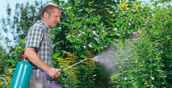 Опрыскивание огорода препаратом корадо