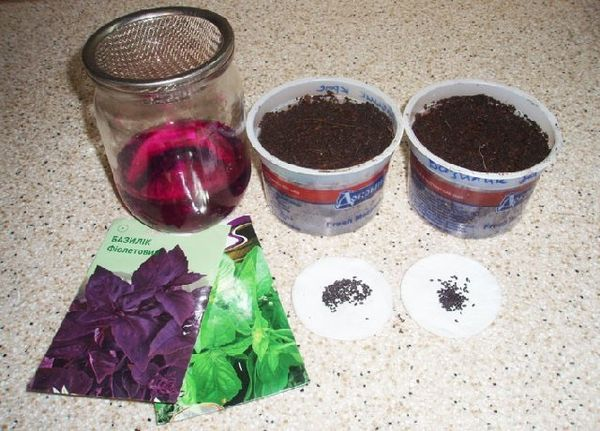 Перед посадкой семена нужно продезинфицировать