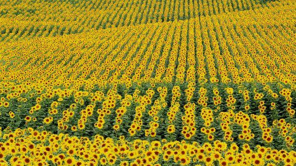 Главный критерий богатого урожая - комплексная борьба с сорной травой