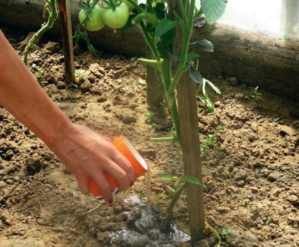 Отзывы садоводов об удобрении Здравень