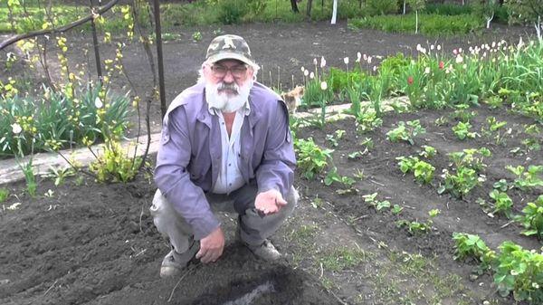 Сроки для посадки томатов в открытый грунт в Беларуси и на Кубани