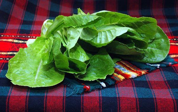 В древние времени мясистыми листьями лечили заболевания