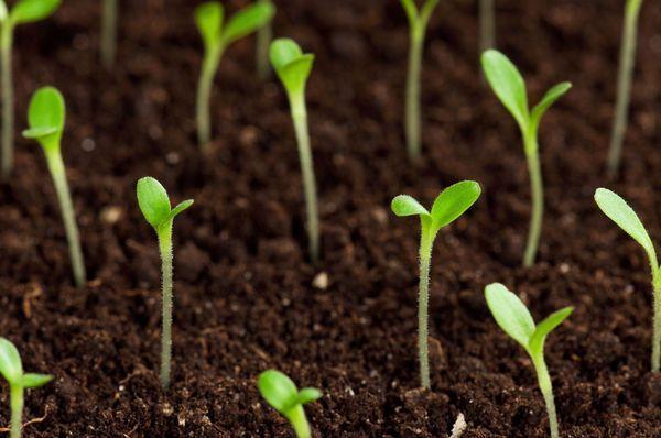 Проверка всхожести и сроки годности семян