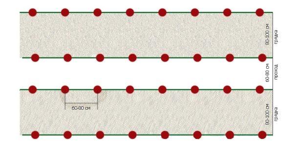 Схема посадки индетерминантных сортов томатов