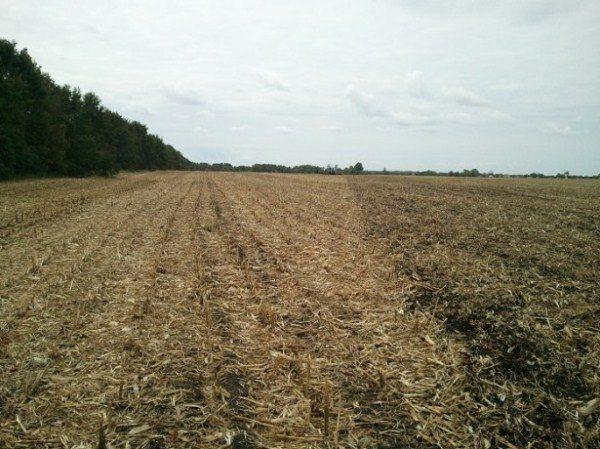Почва для посадки подсолнуха после зерновых культур и кукурузы подойдет просто идеально