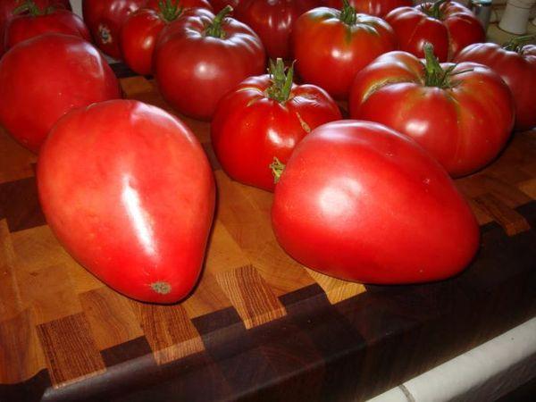 Первые плоды куста не подходят для засолки ввиду больших размеров