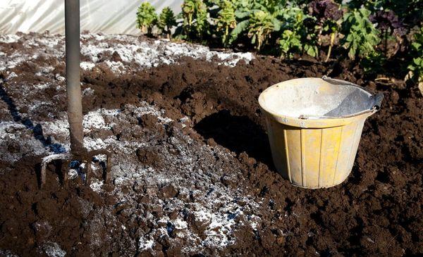 Кислотность почвы перед высадкой регулируется известкованием