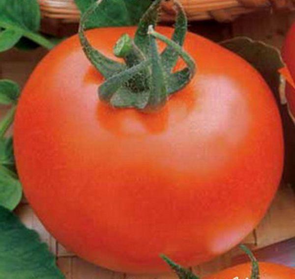 Вес плодов сорта Ирина F1 - в среднем 130 грамм