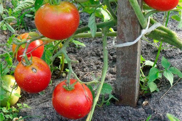 Чтобы плоды были красивыми и здоровыми - необходимо использовать фунгициды