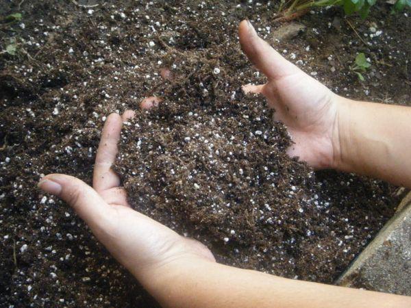 Для картофеля нитрофоску нужно обязательно перемешать с землей при внесении
