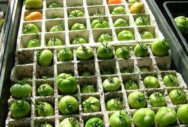 Хранение помидор в ящиках