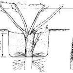 Схема прививки сверлом