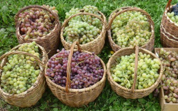 Виноград кишмиш разных сортов в корзинках