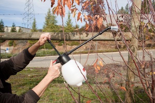 Каждое дерево опрыскивают сенью с определенной целю
