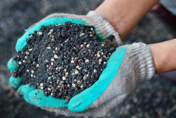 Смешанным с землей удобрением присыпают растения