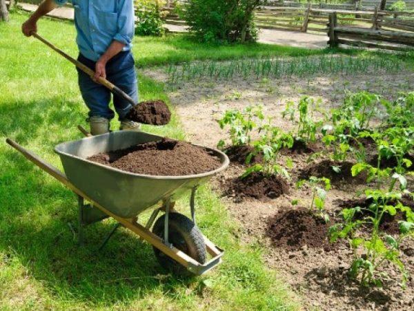 Под корневую систему растений