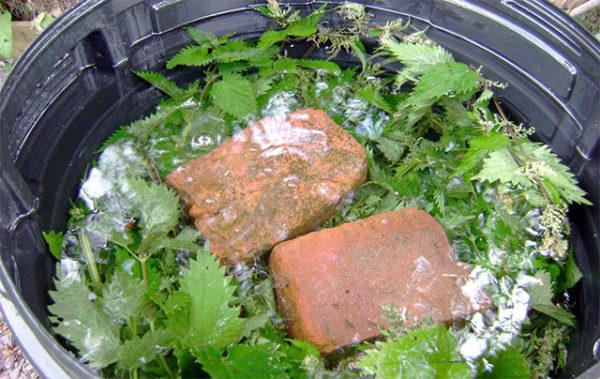 Вариант приготовление дрожжей с крапивой