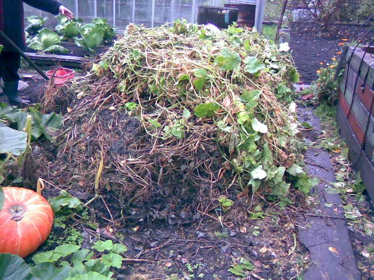 можно ли класть листья капусты в компостную яму