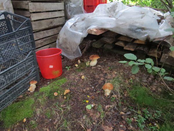 Грибы будут расти на садовом участке если правильно выбрать место