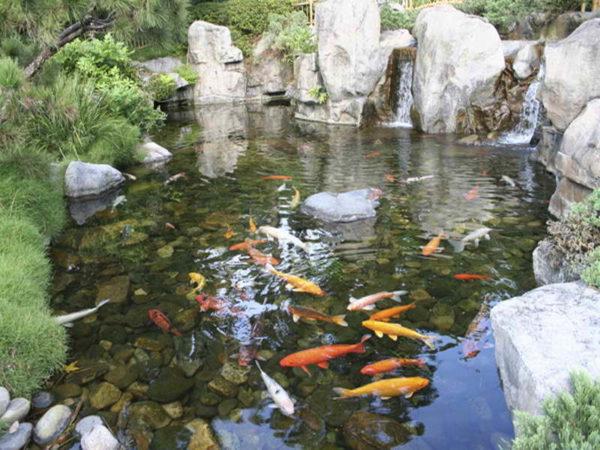 водоем для рыбы