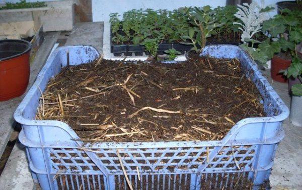 Биогумус полезен для растений