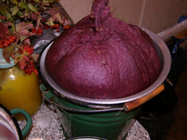 Чтобы вино получилось ароматным, и вкусным необходимо перебрать каждую ягоду от насекомых, отделить зеленые и испорченные ягоды